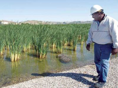 produced-water-discharge-san-ardo-wetlands